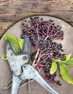 empty the woods Archives - Empty the Fridge Natural Kitchen, Healing Herbs, Herbalism, Healthy, Nature, Plants, Diy, Food, Vegan