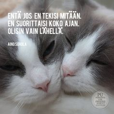 Free Image on Pixabay - Cats, Sisters, Ragdoll, Animal Free Pictures, Free Images, Powerful Words, Quote Of The Day, Thats Not My, Sisters, Positivity, Sayings, My Love