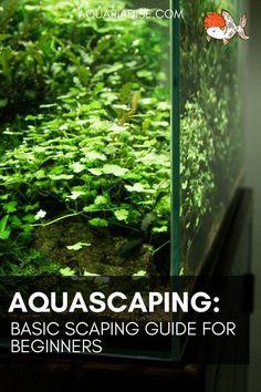 A basic guide to aquascaping: Landscaping inside your aquarium Planted Aquarium, Aquarium Garden, Freshwater Aquarium Plants, Aquarium Landscape, Aquarium Setup, Aquarium Design, Aquarium Ideas, Nature Aquarium, Freshwater Fish