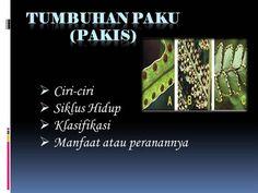 Tumbuhan Paku (Pakis) by aSGuest120486 via authorSTREAM