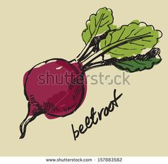 hand drawn fresh color beet on beige