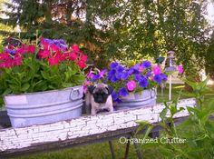 Wheelbarrow garden - My Hometalk Garden Junk Clipboard, It's Bigger and Better! Garden Junk, Diy Garden, Garden Planters, Garden Tools, Garden Ideas, Recycled Garden, Indoor Garden, Planter Pots, Rustic Gardens