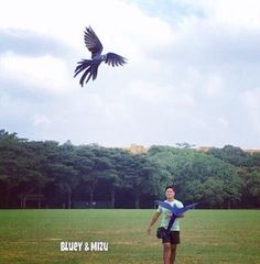 What are you still doing down there, Mizu? #hyacinthmacaw #parrots #macaws #loro #guacamaya #papagaio #papegøje #papegaai #papagei #pappagalli #papuga #Попугаи #papağan #鸚鵡  #affinityflight #parrot #macaw #guacamayo #arara #perroquet #papagaj #pappagallo #papegøye #Попугай #papegoja #ببغاء #オウム#앵무새 #طوطی #flyingparrots #freeflyingparrots