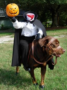 HGTV fan newfy1_5226167 turned his dog into Daredevil, the Headless Horseman's horse. At less than five pounds, the costume is easy for a dog to carry. Brass rings on the bridle mimic the look of a bit.