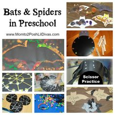 bats+n+spiders+main.jpg 1,024×1,024 pixels