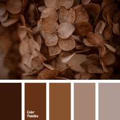 A lovely restrained palette paints, personifying the ground. Brown symbolizes reliability, stability and security. It is a great color for creating a home-.