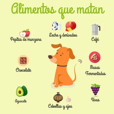 Alimentos que matan a los perros - Love Pet, I Love Dogs, Baby Dogs, Pet Dogs, Animals And Pets, Cute Animals, Dog Training Courses, Education Canine, Puppies Tips