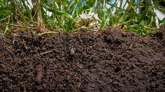 The-Surprising-Healing-Qualities-of-Dirt.jpg (940×529)