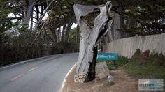 Ghost Tree - Check more at https://www.miles-around.de/nordamerika/usa/kalifornien/highway-no-1-von-san-francisco-nach-marina/,  #17-Miles-Drive #Carmel #HighwayNo.1 #Hotel #Kalifornien #Nationalpark #Natur #Pazifik #Reisebericht #SanFrancisco #USA