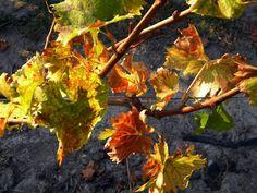 Autumn in  Monferrato  by luigi  rabellino