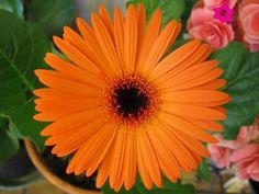 Opciones en flores naranjas para boda