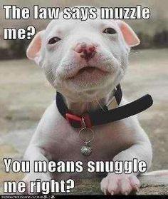 pit bull love   So cute