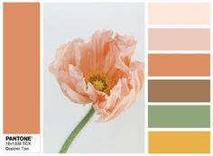 PANTONE 16-1338 Copper Tan - combination