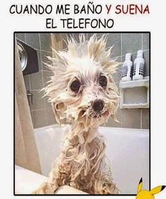 Cuando me baño y suena el teléfono