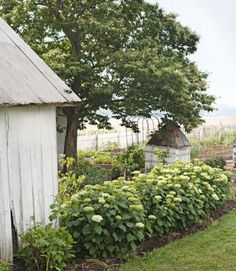 A hedge of 'Annabelle' hydrangeas encloses the herb garden. The small structure — painted white and covered with trellis panels — camouflages an unsightly well house.