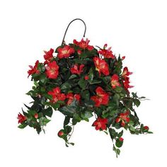 Add silk flowers to ivy #houseplants for great #Valentine's Day gift. http://www.houseplant411.com/houseplant/english-ivy-plant