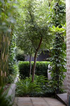 Private garden, Kensington, Sydney: Secret Gardens of Sydney