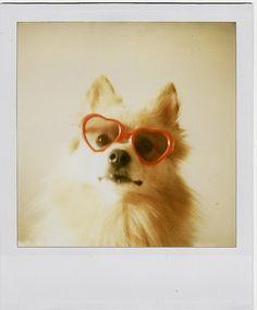love dog <3