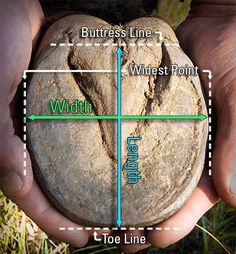 How to Properly Measure Your Horse's Hoof