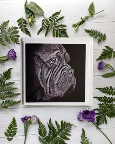 French Mastiff Dog, Mastiff Dogs, Cute Baby Elephant, White Pencil, White Envelopes, Monochrome, How To Draw Hands, Art Pieces, Gallery Wall