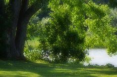 I uploaded new artwork to fineartamerica.com! - 'Tree At  Riverside Park 1' - http://fineartamerica.com/featured/tree-at-riverside-park-1-lanjee-chee.html