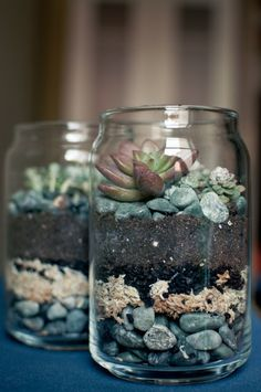 Mason Jar Terrariums!  1.    Take your Mason jar and put rocks in the bottom of it. 2.    Add charcoal (this prevents bacteria). 3.    Add a layer of soil (potting soil is recommended, as it's bug free). 4.    Add succulents (plants that need very little water). 5.    Add sand. If you don't want to purchase sand, you can take beach sand, but just bake it at 350 degrees for 20 minutes to kill and sand fleas.