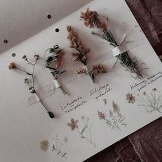I love dried flowers in scrapbooks and bullet journals so this super cute page is PERFECT for me. A great way to store pretty flowers from travels round the world too & Plant Aesthetic, Witch Aesthetic, Flower Aesthetic, Aesthetic Vintage, Aesthetic Photo, Aesthetic Art, Aesthetic Pictures, Kunstjournal Inspiration, Nature Journal