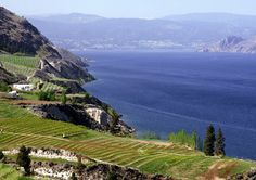 Gorgeous vineyards in the Okanagan! O Canada, Canada Travel, Canada Trip, Fear Of Flying, Amazing Spaces, What A Wonderful World, British Columbia, Wonders Of The World, Places To Travel