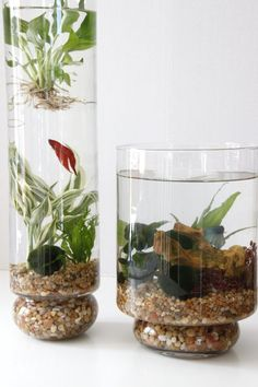 indoor water garden in glass vessels Create a mini indoor water garden in a glass vessel so you can peek into pond life any time you want a nature retreat. HGTV added fish to theirs, but I'd love to build my own personal lily pond.