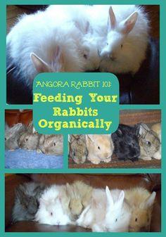 Angora Rabbit how to feed your rabbits organically~JoybileeFarm+GMO-Free Livestock Feed Raising Rabbits For Meat, Meat Rabbits, Farm Animals, Cute Animals, Angora Rabbit, Angora Bunny, Bunny Hutch, Rabbit Food, Rabbit Eating