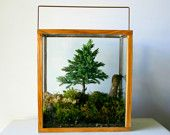 Table Top Forest Terrarium. $120.00, via Etsy.