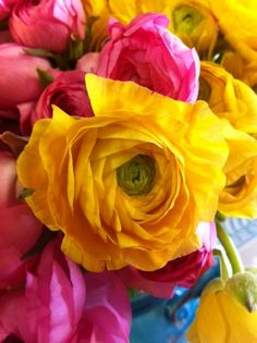 Beautiful pink and yellow ranunculous