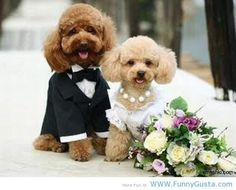 cute things | Puppies Just Married tumblr quotes