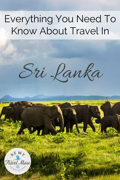 Sri Lanka is an unexpected delight, full of awesome cultural sights, excellent safaris, friendly locals, and beautiful tea plantations. Plan with this guide.