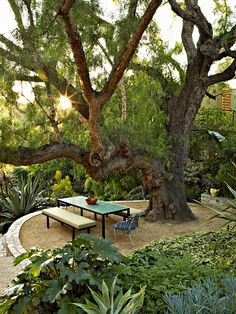 URBAN OASIS — In Judy Kameon's garden, a terraced dining area (with her Plain Air table and benches) under a California pepper tree is surrounded by acanthus, agave and other plants. Photographs by Tom Mannion Outdoor Rooms, Outdoor Gardens, Outdoor Living, Outdoor Decor, Outdoor Seating, Modern Gardens, Small Gardens, Agave Americana, Landscape Design