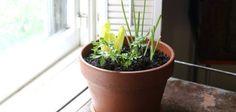 ¿No tienes jardín? ¡No hay problema! Crea una huerta autosustentable en la ventana de tu hogar | eHow en Español