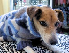 Did you accidentally machine dry your favorite wool sweater? Did moths get the best of your winter wardrobe? Don't throw that shrunken down, holey treasure in the trash! Transform it into a warm, new sweater for your very best four-legged friend.