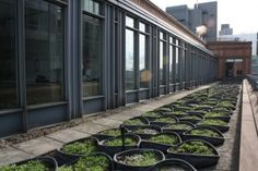 inmidtown's green roofs - Welcome to inmidtown
