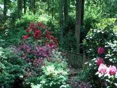 Garden picture 9