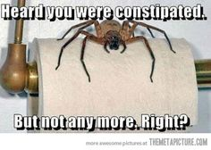 Giant scary spiders memes - photo#46