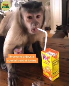 Very sweet treat 😋😊🤗 Cute Little Animals, Cute Funny Animals, Funny Cute, Funny Animal Memes, Funny Dogs, Cute Dogs, Gato Gif, Pet Monkey, Animal Antics