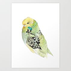 Rocky the budgie Art Print by dippyegg Budgie Parakeet, Budgies, Bird Design, Diy Accessories, Funny Cute, Illustration Art, Illustrations, Cute Pictures, Birds