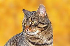 What Should You Do if Your Cat's a Little Chubby? Here's a helpful guide: http://www.primepetinsurance.com.au/blog/what-should-you-do-if-your-cats-a-little-fat/