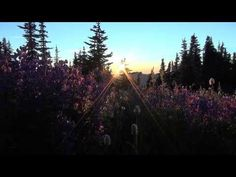 Video: Der Olympic National Park in Washington