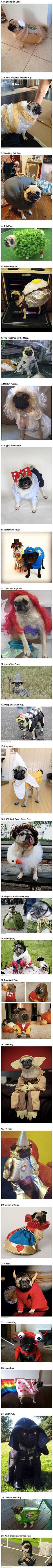 The ultimate Pug costumes. Bahahaha oh my gosh