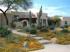 Beautiful spring bloom | Landscaping | Arizona