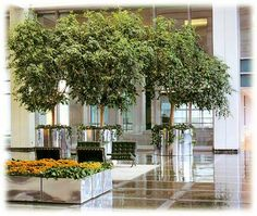 Great use of trees in this lobby