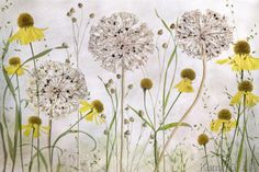 Alliums+and+heleniums