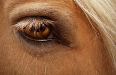 love the horses eye/s!