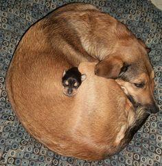 mama loving puppy